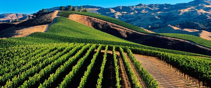 Geologia e vino