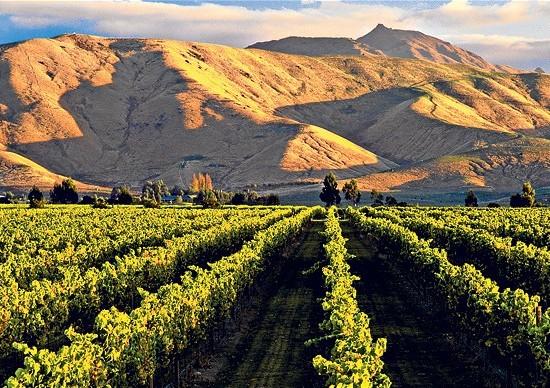 Vini dell'altro mondo: il boom australiano e neozelandese