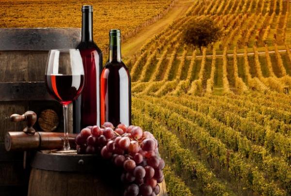 Alla ricerca del migliore vino del Lazio