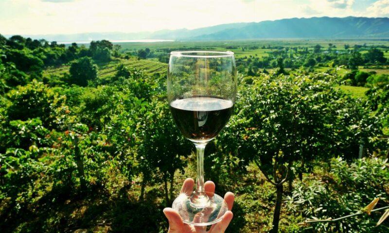 Vini italiani in purezza: i 5 più amati e apprezzati in tutto il mondo